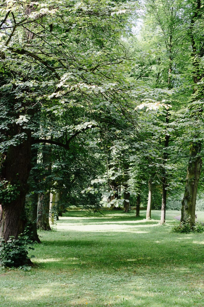 Naturbilder aus dem Prinzenpark. Diesmal: Eine Baumallee.