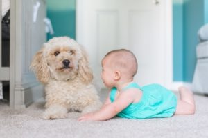Babyfoto im ersten Jahr: Krabbelndes Baby mit Hund