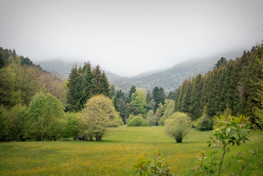 Der Einstieg in die Wanderung bei den sogenannten Drei Teichen im Elsass.