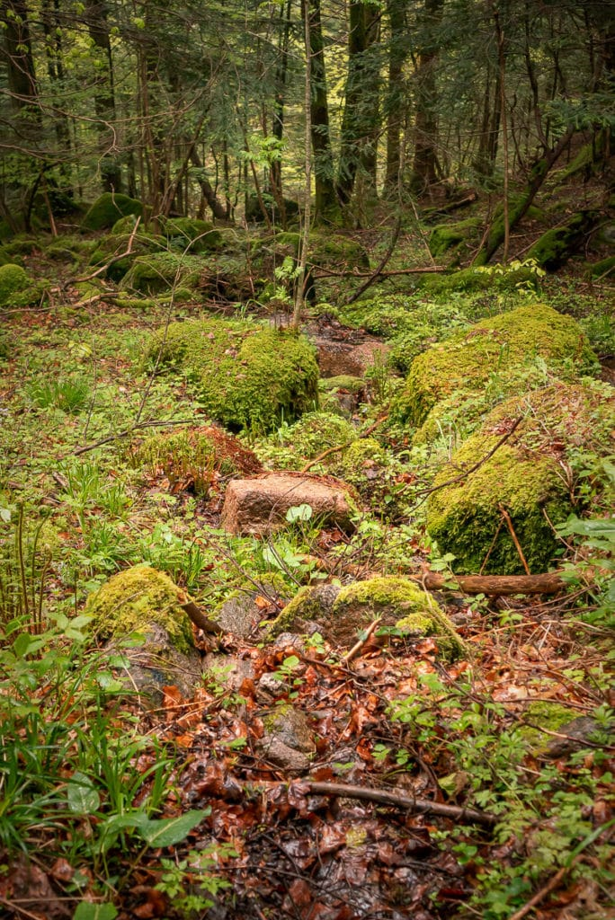Moosbewachsene Steine und altes Laub am Rande der Wanderung im Elsass.