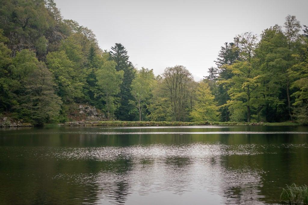 Der letzte See auf der Wanderung im Elsass eignet sich ebenfalls für einen Heiratsantrag.
