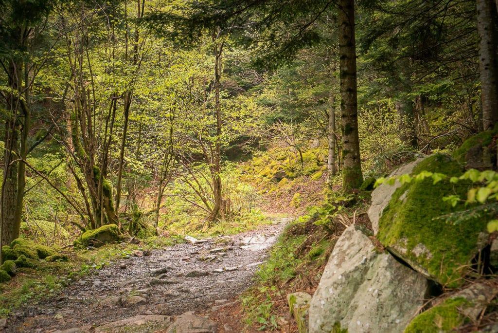 Massiver Stein trifft auf hochgewachsene Bäume und macht die Wanderung abwechslungsreich.